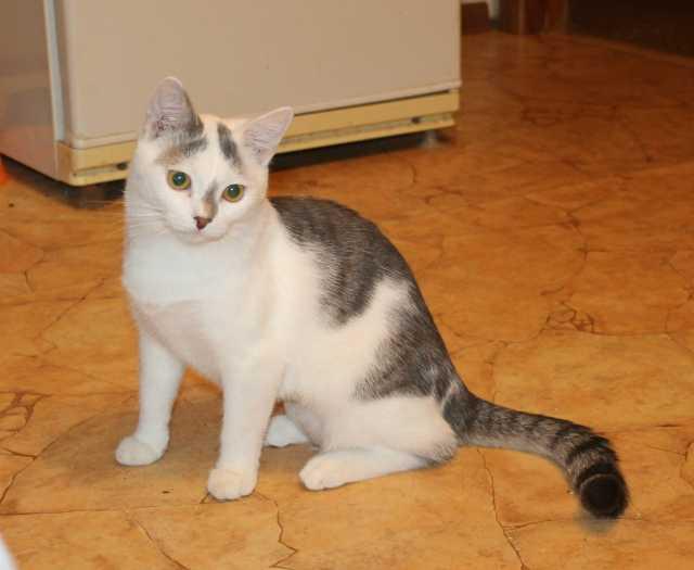 Отдам даром Симпатяга Болтик, юный котик в дар.