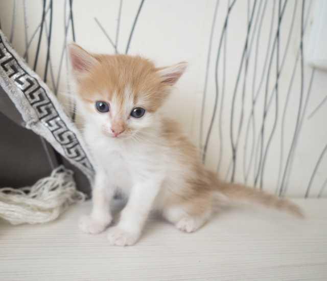 Отдам даром Котёнок Рафаэль- милый, активный малыш