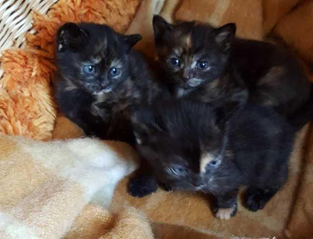 Отдам даром Прелестные девочки-котятки