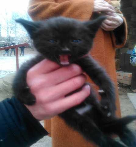 Отдам даром Котёнок ищет доброго человека.