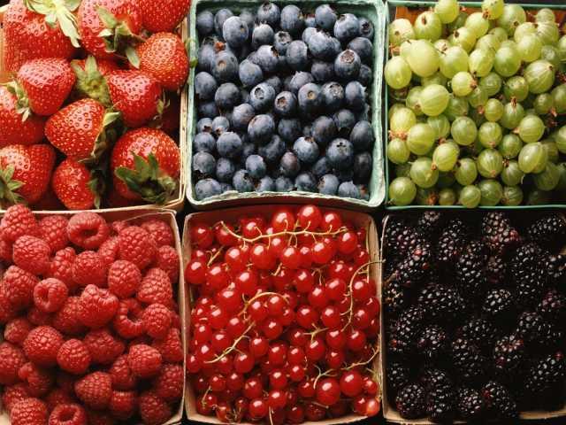 Куплю ягоды оптом