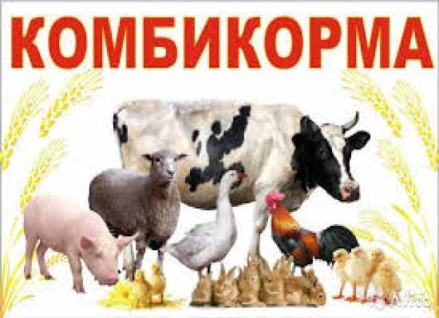 Предложение: Продажа комбикормов от производителя