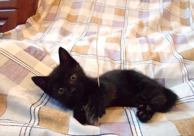 Отдам даром Отдам котенка Тимошу в добрые руки