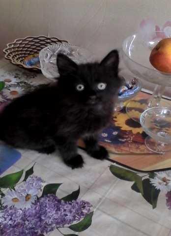 Отдам даром котик 2 месяца