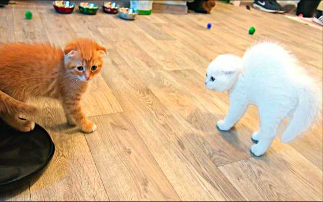 Отдам даром красивые котята