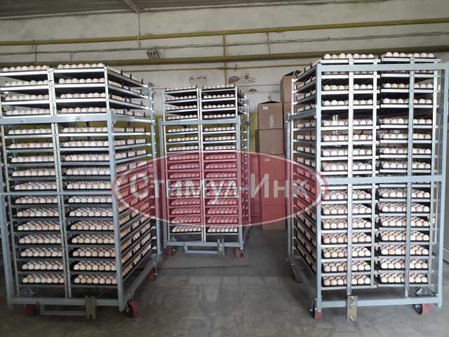 Продам Суточный бройлер (РОСС-308)
