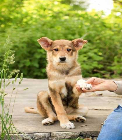 Отдам даром Собака щенок
