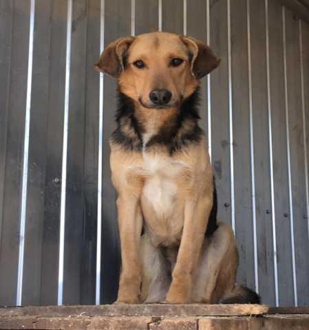 Отдам даром Собака ждёт доброго хозяина