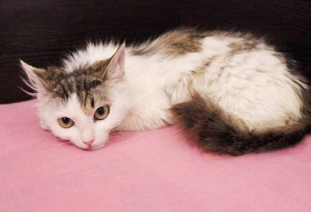 Отдам даром Ласковый котенок Лакрица ищет семью