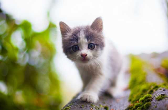 Отдам даром котенок