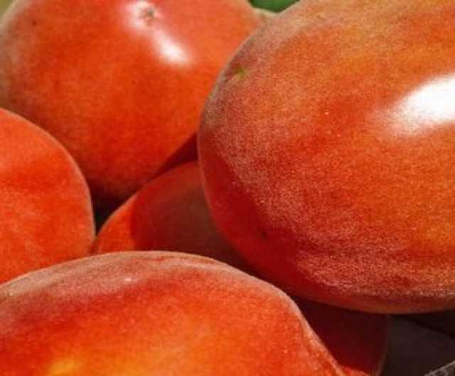 Продам Томат - персик, на сайте скороспелка.рф