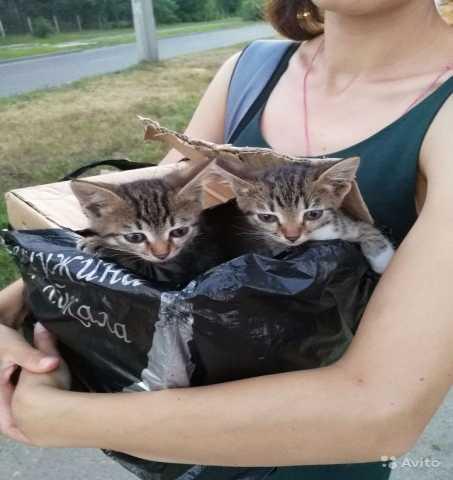 Отдам даром Самые милые котята