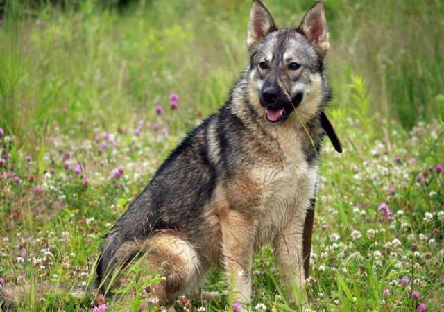 Отдам даром Изумительно красивая, умная собака
