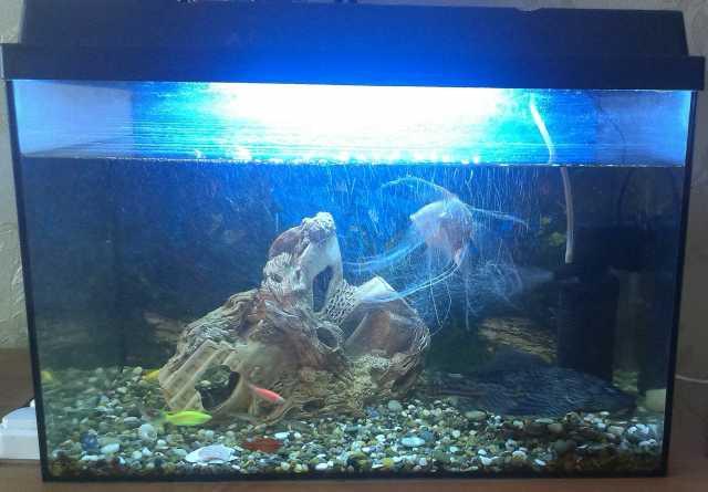 Продам: Аквариум с рыбками, фильтром и декором