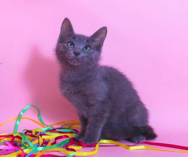 Отдам даром Малыш Леопольд, дитя добрейшей души. Кот