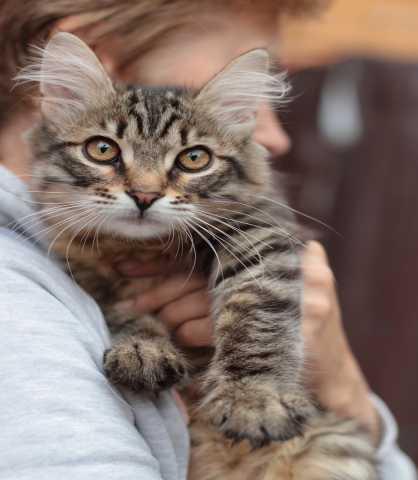 Отдам даром кошка котенок