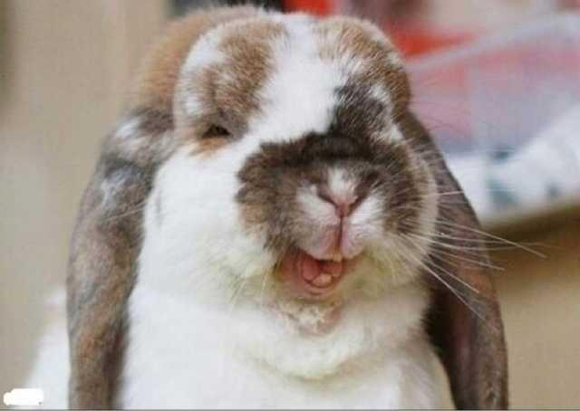 Продам: Комбикорм для кроликов в Московской обл