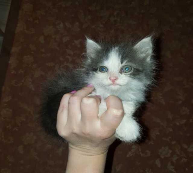Отдам даром Близнецы-котятки, крохотные котики в дар