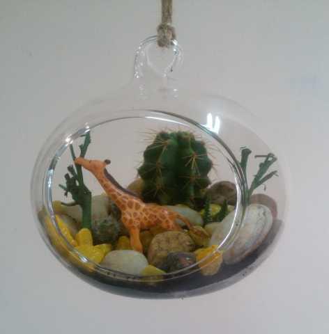 Продам Флорариум в стеклянной подвисной вазе