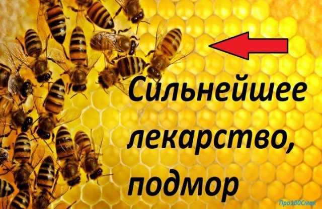 Продам пчелинный подмор и прополис в Кемерово