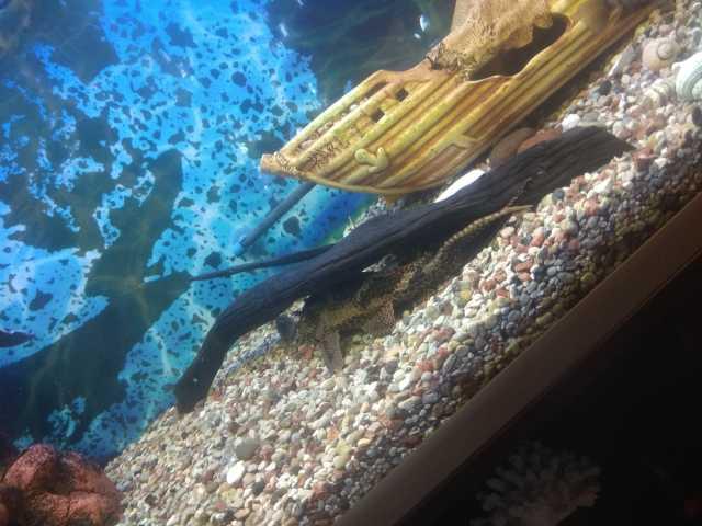 Продам Аквариум и рыбки