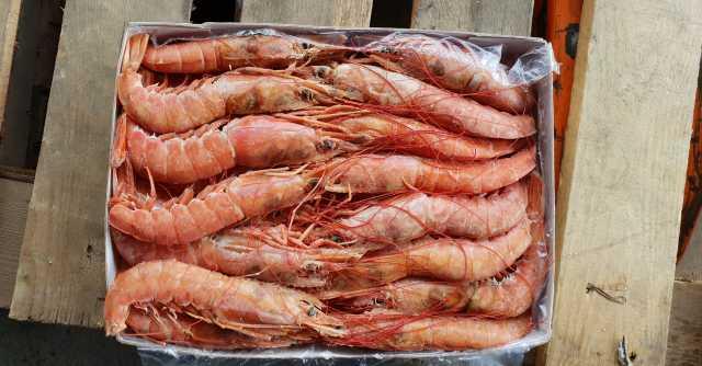 Продам Свежемороженая рыба и морепродукты