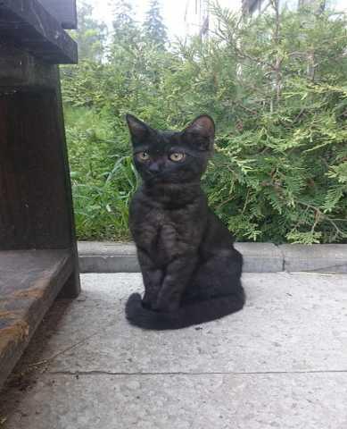 Отдам даром Ищу дом для котика-подростка