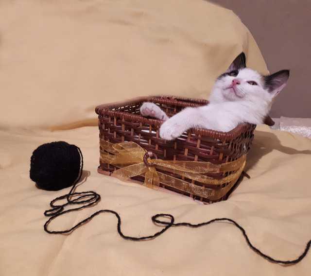 Отдам даром красивый котенок