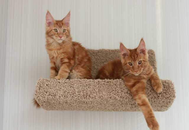 Продам Полка-лежанка для кошек и собачек