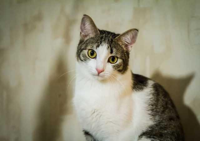 Отдам даром Ищет хозяина котик Ежка.