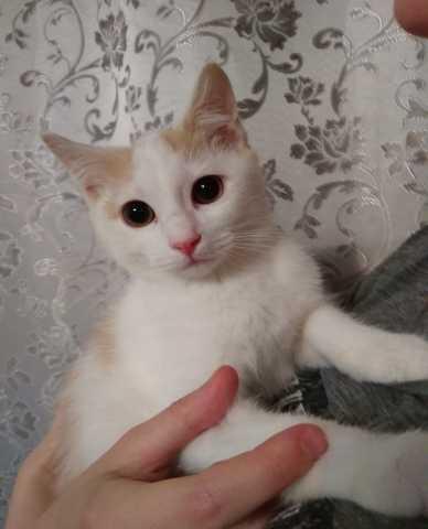 Продам Маленький котик