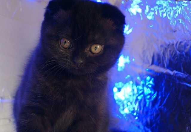 Продам: Котят