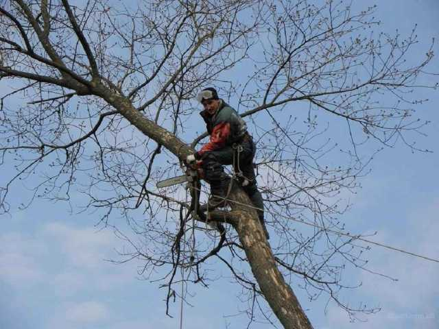 Предложение: Спил, опиловка, расчистка деревьев