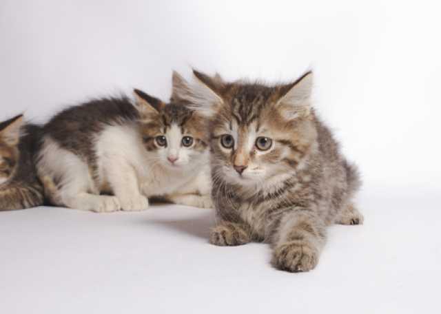 Отдам даром Очаровательные плюшевые котята в дар!