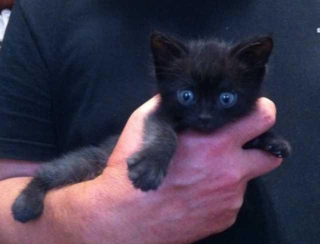 Продам Котёнок чёрненький (котик)