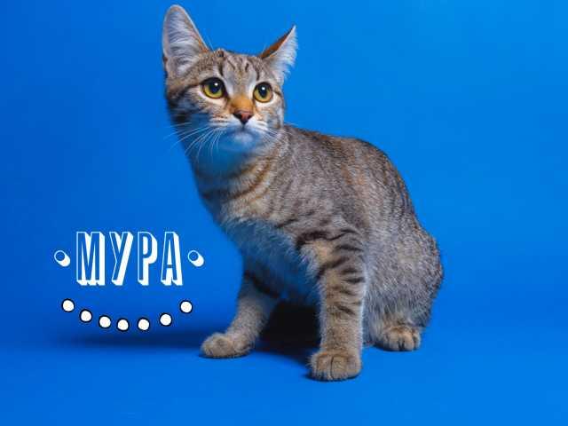 Отдам даром Мура - котенок в дар