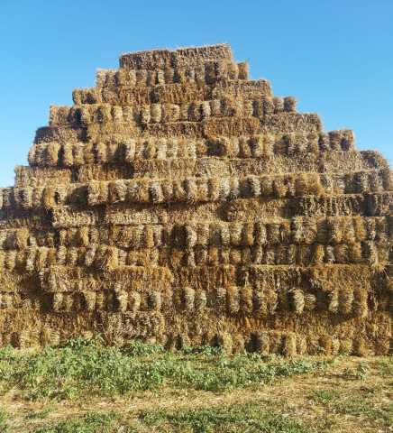 Продам Солома пшеничная в тюках 25-30 кг