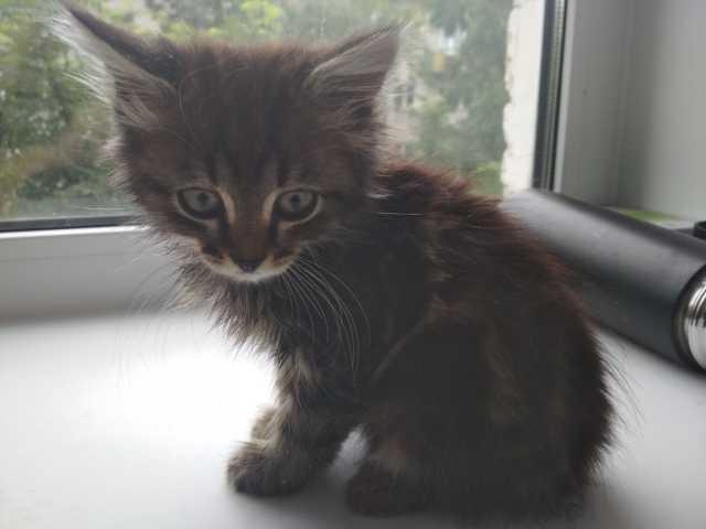 Отдам даром Отдам котёнка