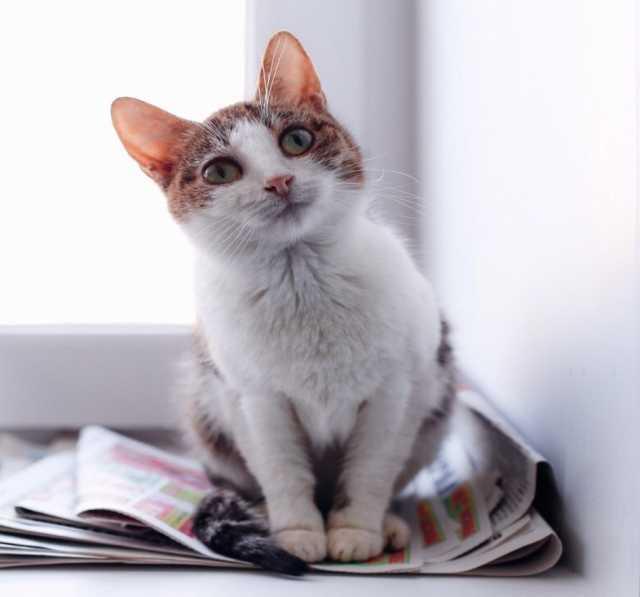 Отдам даром Кошка ищет дом