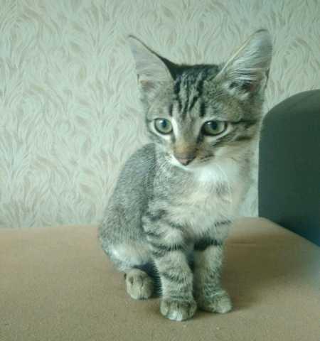 Отдам даром Котёнок ищет дом