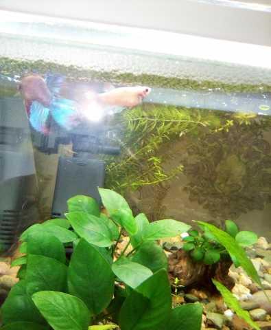 Продам Аквариумные рыбки