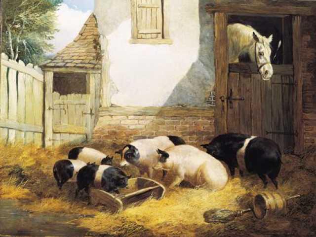 Продам: Свиной комбикорм КК 58
