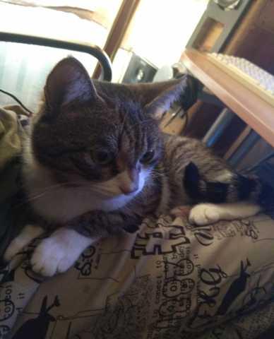 Отдам даром кот, зовут Кузя, 2 года