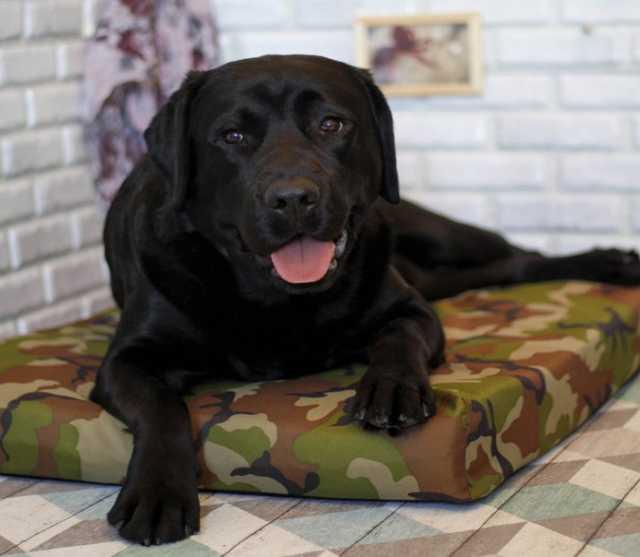 Продам Лежак для собак - Зелёный камуфляж