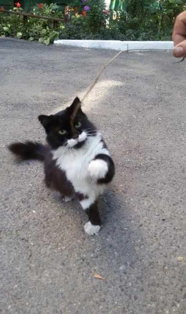 Отдам даром Кошка