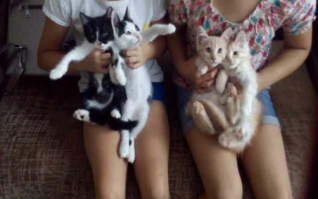 Отдам даром Три кота и кошечка даром
