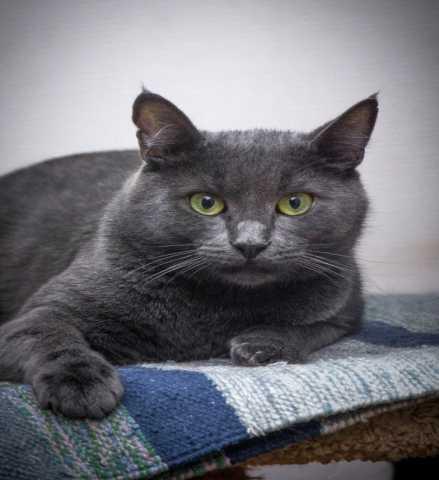 Отдам даром Брутальный кот Серж ищет дом