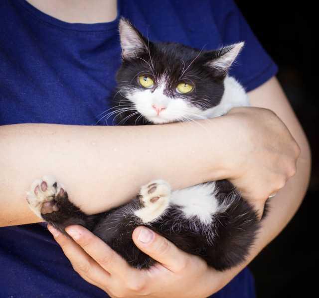 Отдам даром котенка Таша