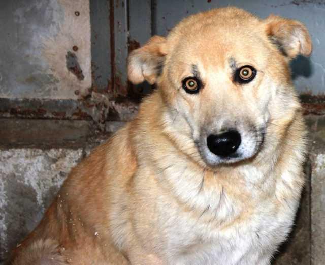 Отдам даром Срочно надо спасать собак с ГЭЦ