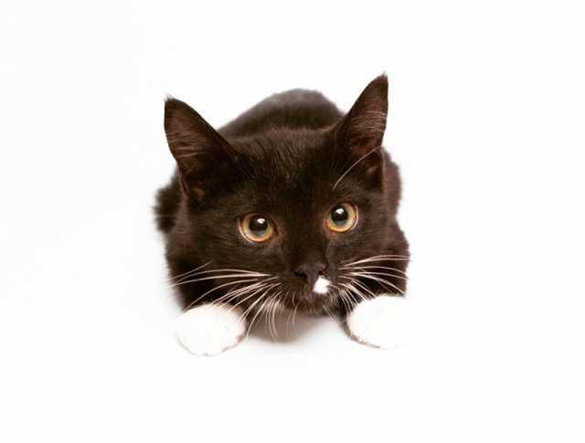 Отдам даром Ищет дом котенок Бакстер!